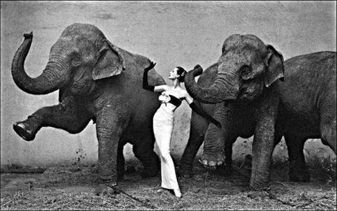 elefanti se leganau